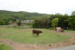 小豆島オリーブ牛